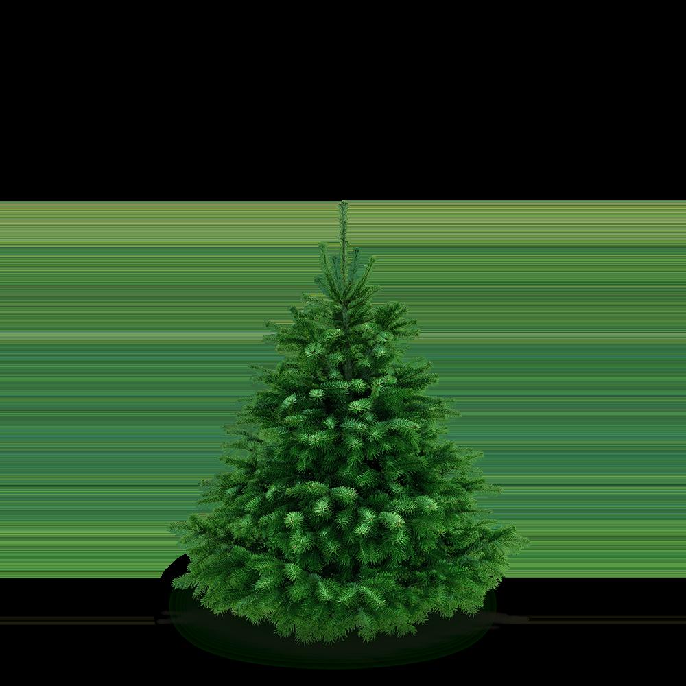 Weihnachtsbaum 110 - 120 cm