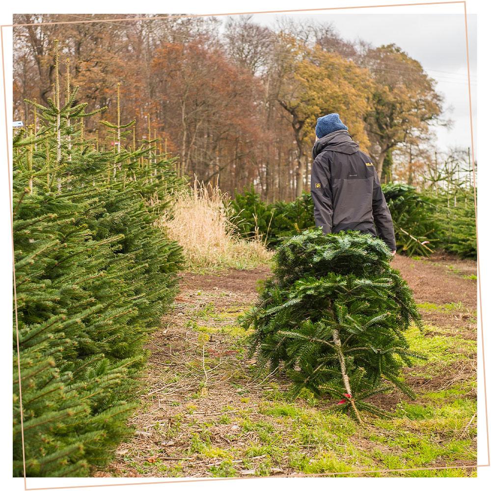 Christian Bohlig trägt Weihnachtsbaum