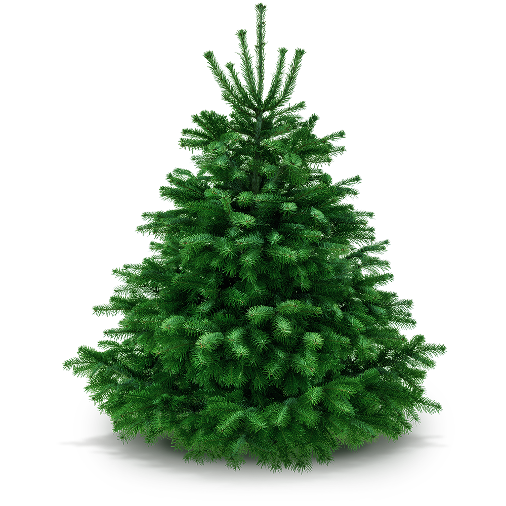 Weihnachtsbaum 170 - 185 cm