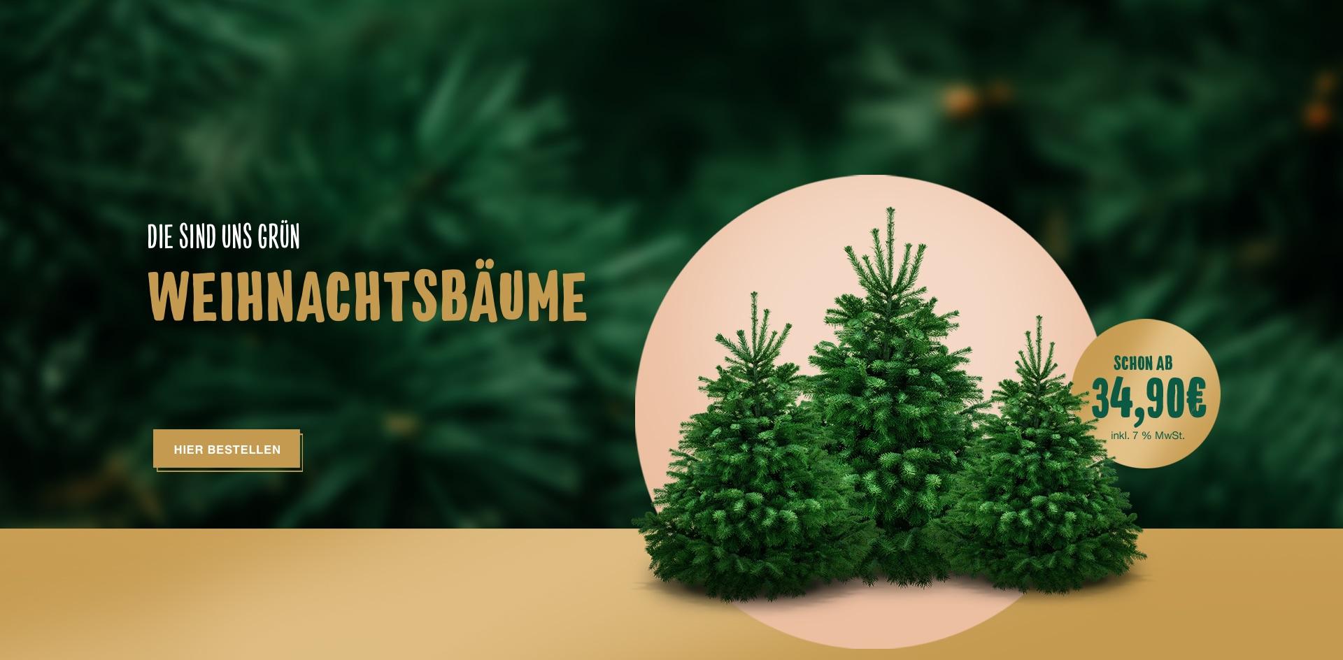 Header Weihnachtsbaeume