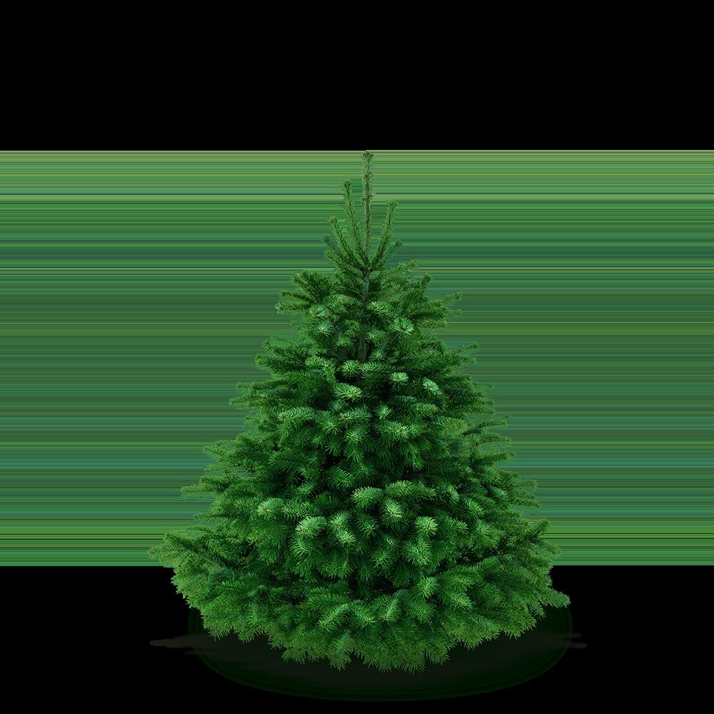 Weihnachtsbaum 125 - 145 cm